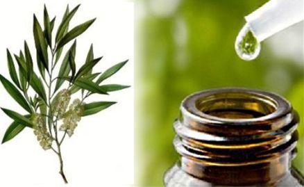 Tea Tree rimedio naturale zanzare