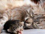 Antipulci gatto rimedio naturale