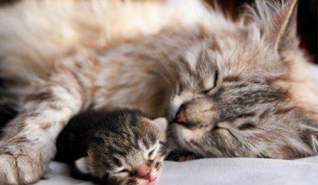 Antipulci gatto rimedio naturale bio efficace