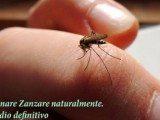 eliminare-zanzare